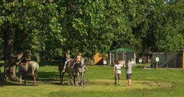 dia-de-campo-caballos